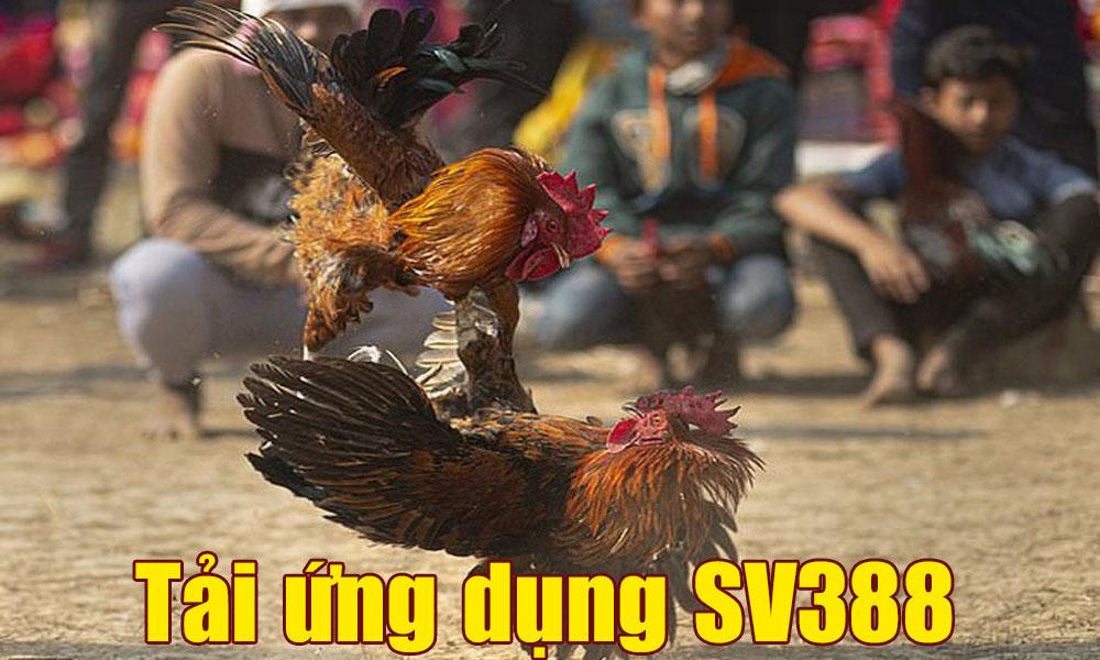 Tải ứng dụng SV388