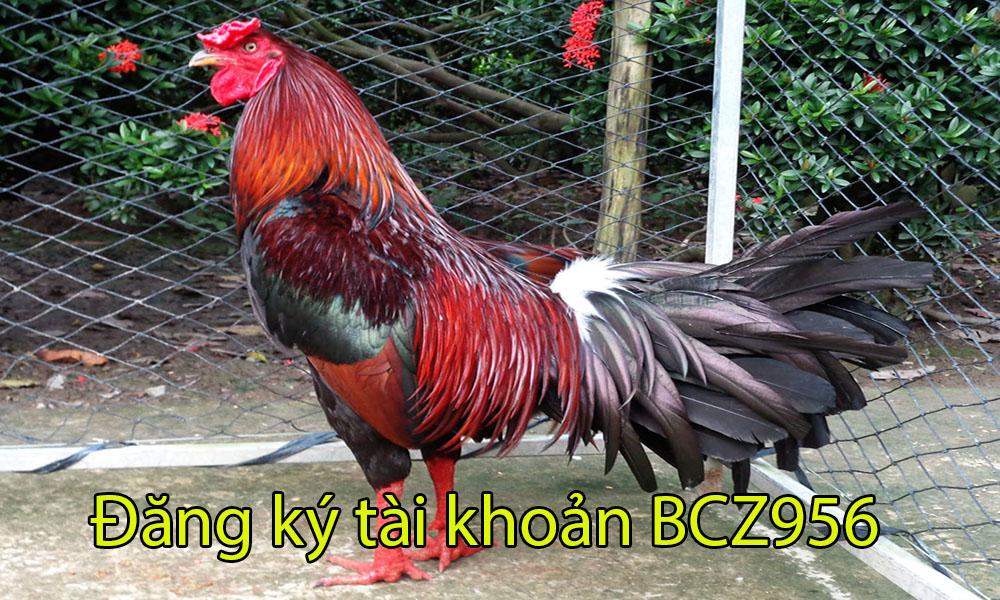 Đăng ký tài khoản BCZ956