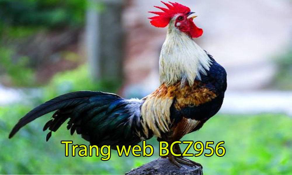 Giới thiệu nhà cái BCZ956
